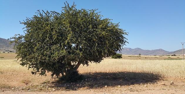 olej arganowy maroko
